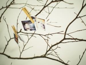 DIY   Tree branch photograph hanger