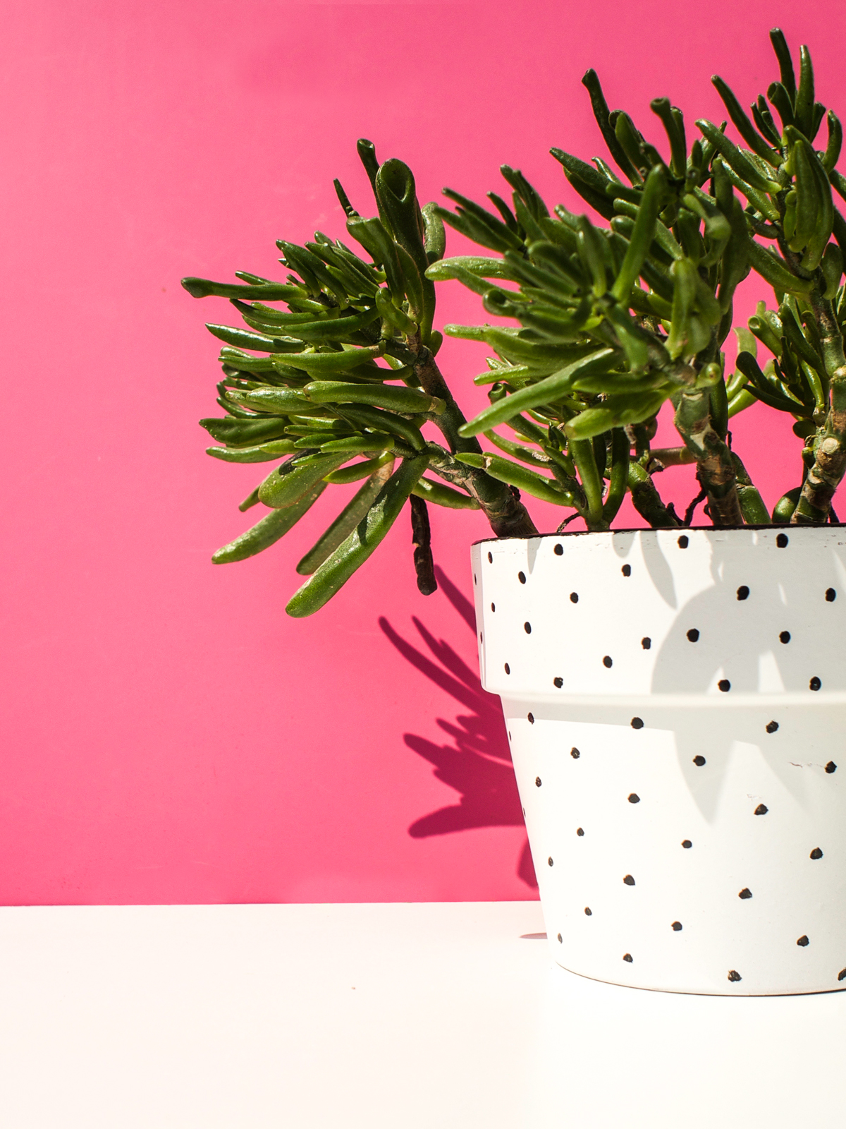 Flower Pot + Succulent